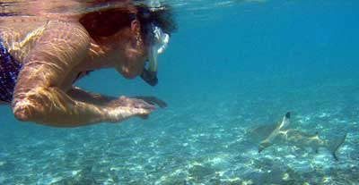 Fun Facts About Sharks Most Dangerous Places For