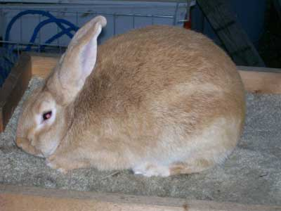 How Long Can Rabbits Live Without Food