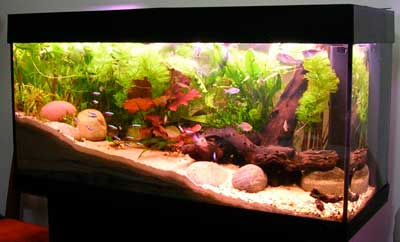 Types Of Tank For Raising Saltwater Fish