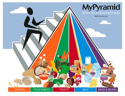 Understand Food Pyramid Diagram , What Food Group Does A Mushroom ...