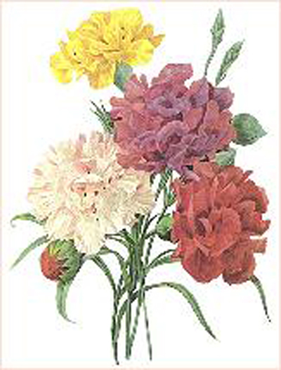 Sex and the city carnations