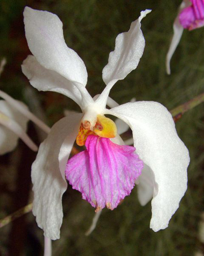 How do you take care of orchids indoor orchid care How do you care for orchids after they bloom