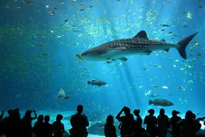 Aquariums In New Jersey